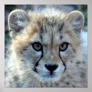 cheetah-cub10x10 poster