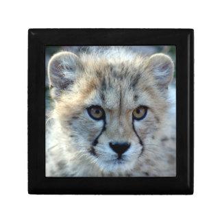 cheetah-cub10x10 small square gift box