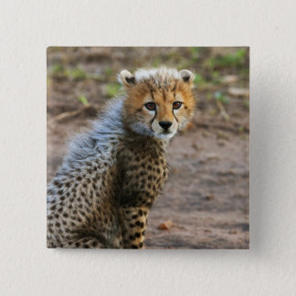 Cheetah Cub Acinonyx Jubatus) as seen in the 15 Cm Square Badge