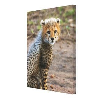 Cheetah Cub Acinonyx Jubatus) as seen in the Canvas Prints