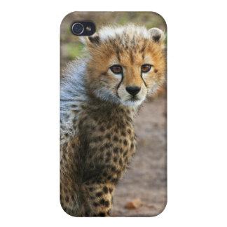 Cheetah Cub Acinonyx Jubatus) as seen in the iPhone 4/4S Cover