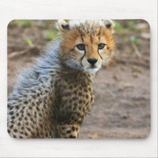 Cheetah Cub Acinonyx Jubatus as seen in the Mousepads