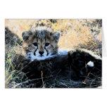 Cheetah cub customisable note card