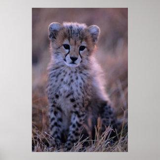 Cheetah Cub | Savannah, Kenya Poster