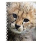 Cheetah cub spiral note book