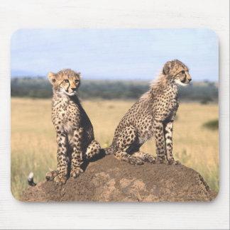 Cheetah Cubs Mousepad