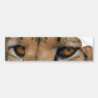 Cheetah Eyes Bumper Sticker