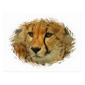 Cheetah Face Postcard