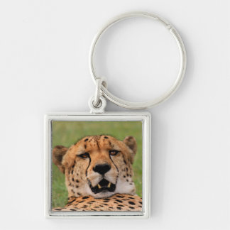 "Cheetah Face - Square Key Ring 3.5 cm (1.38"")"