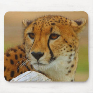Cheetah Face Wildlife Mousepad