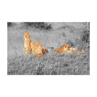 Cheetah family resting on a small hill canvas print