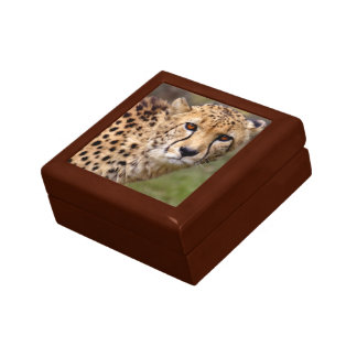Cheetah Gift Box