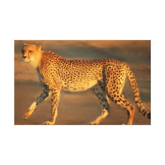 Cheetah In The Golden Hour Canvas Print