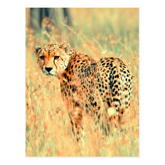 Cheetah into the wilderness