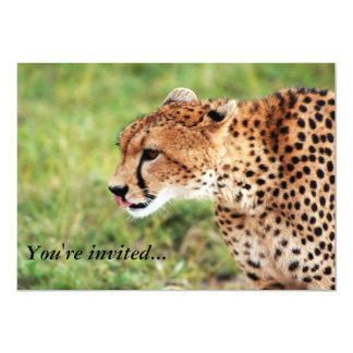 Cheetah Invitation Card
