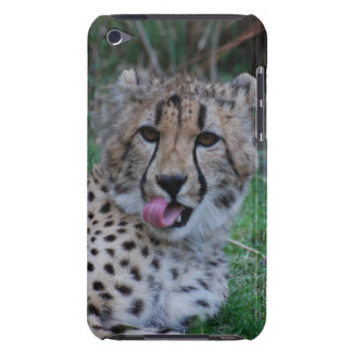 Cheetah Licking His Chops iPod Touch Cover