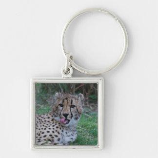 Cheetah Licking His Chops Keychain