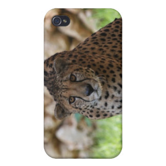 Cheetah Looking at his Prey Cases For iPhone 4