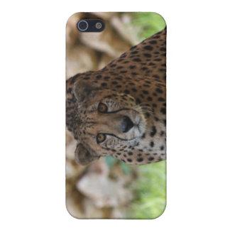 Cheetah Looking at his Prey iPhone 5 Covers