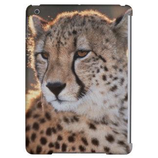 Cheetah looking away