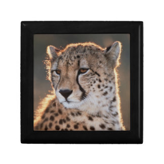 Cheetah looking away gift box