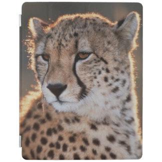 Cheetah looking away iPad cover