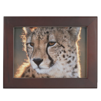 Cheetah looking away keepsake box