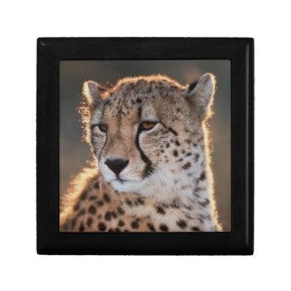 Cheetah looking away small square gift box