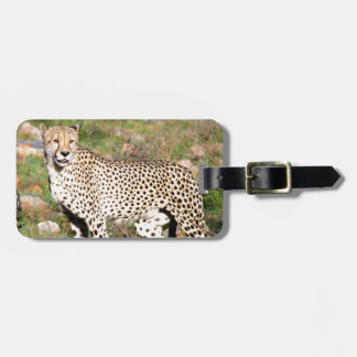 Cheetah looking out for danger in South Africa Luggage Tag