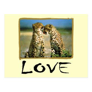 Cheetah Love Postcard