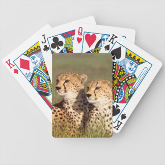 Cheetah Lying In Grass, Ngorongoro Conservation Bicycle Playing Cards