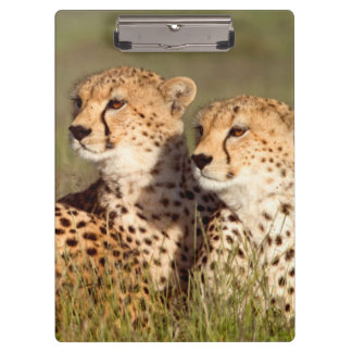 Cheetah Lying In Grass, Ngorongoro Conservation Clipboard