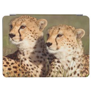 Cheetah Lying In Grass, Ngorongoro Conservation iPad Air Cover