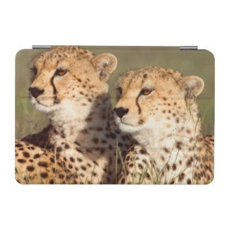 Cheetah Lying In Grass, Ngorongoro Conservation iPad Mini Cover