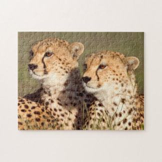 Cheetah Lying In Grass, Ngorongoro Conservation Jigsaw Puzzle