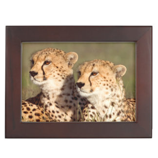 Cheetah Lying In Grass, Ngorongoro Conservation Keepsake Box