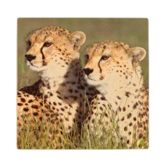 Cheetah Lying In Grass, Ngorongoro Conservation Wood Coaster
