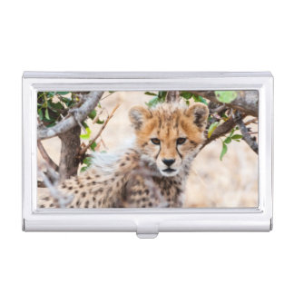 Cheetah, Maasai Mara National Reserve Business Card Holder