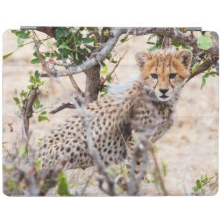 Cheetah, Maasai Mara National Reserve iPad Cover