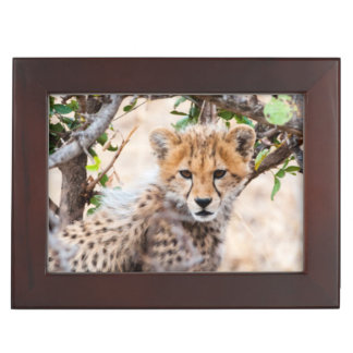 Cheetah, Maasai Mara National Reserve Keepsake Box