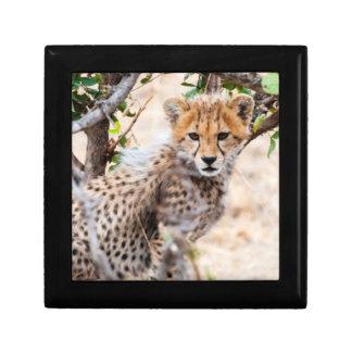 Cheetah, Maasai Mara National Reserve Small Square Gift Box