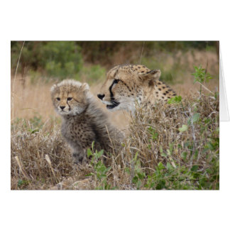 Cheetah Mother and Cub Greeting Card