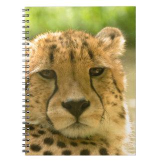 Cheetah Notebooks