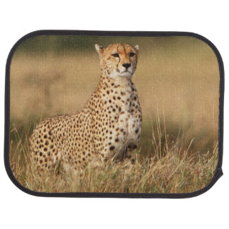 Cheetah on small mound for better visibility car mat