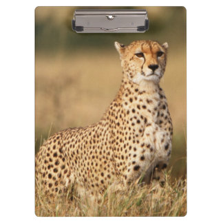 Cheetah on small mound for better visibility clipboard