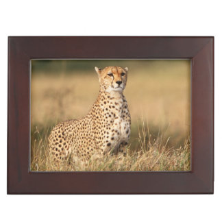 Cheetah on small mound for better visibility keepsake box