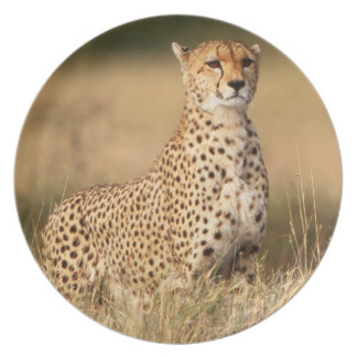 Cheetah on small mound for better visibility plate