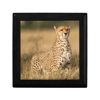 Cheetah on small mound for better visibility small square gift box