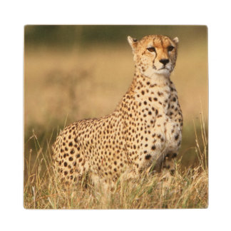 Cheetah on small mound for better visibility wood coaster