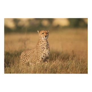 Cheetah on small mound for better visibility wood wall art